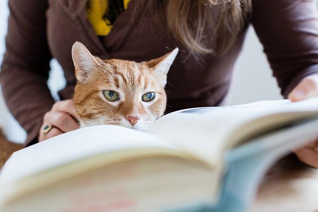 Femme qui lit un livre en caressant un chat, deux activités de bien-être reconnues.
