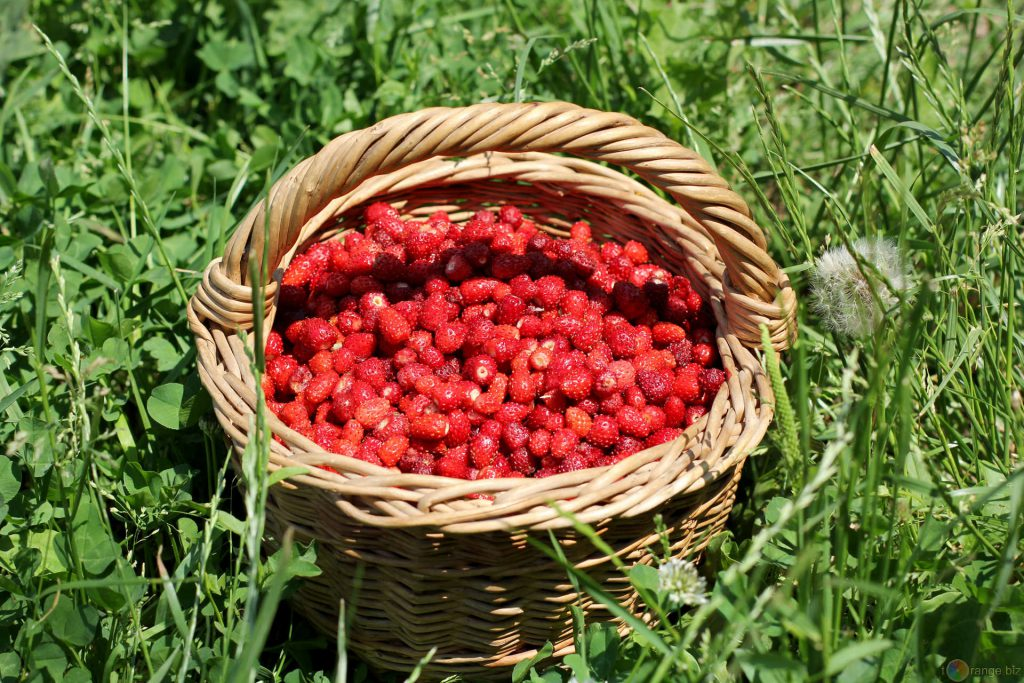 Pannier de fraises (micronutriments)