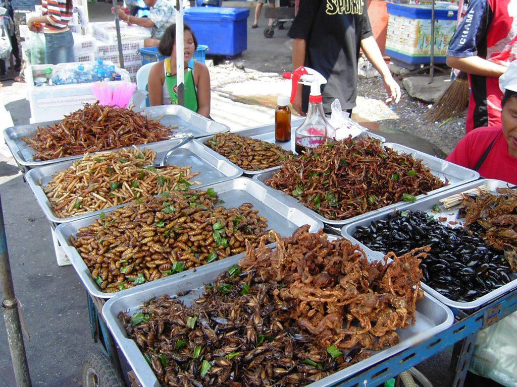 protéine insecte