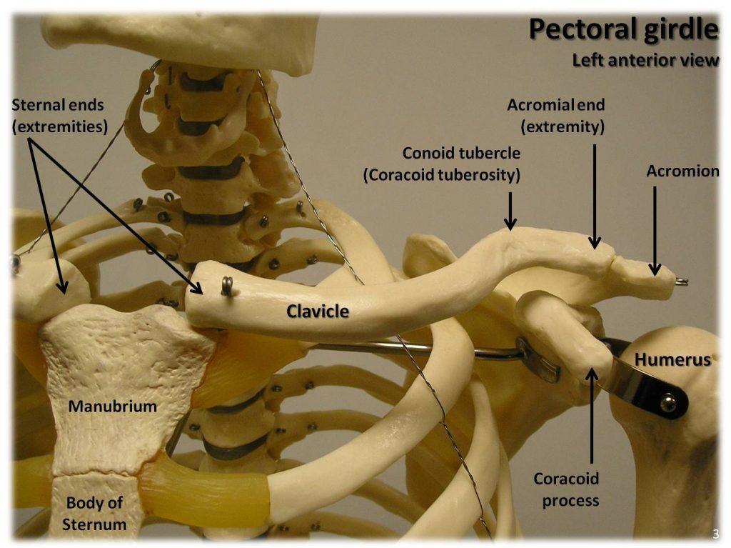conflit sous-acromial de l'épaule