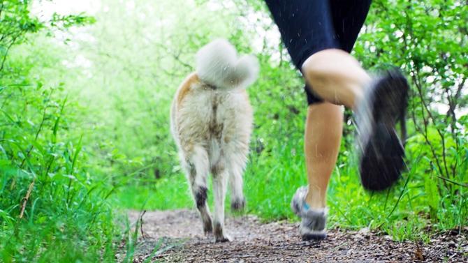 Canicross : course à pied avec son animal de compagnie