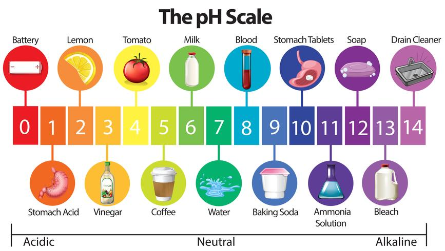 Régime perte de poids : acide base