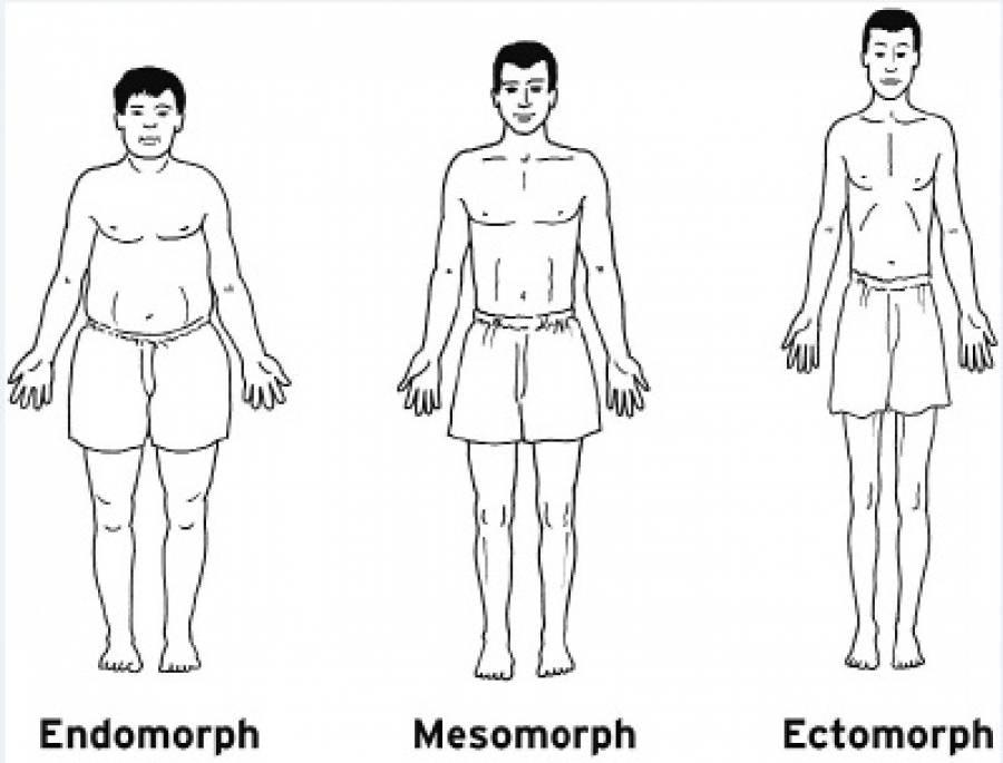Les différents types de morphotypes